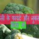 Broccoli in Hindi: ब्रोकली के फायदे और नुकसान हिंदी में पढ़ें